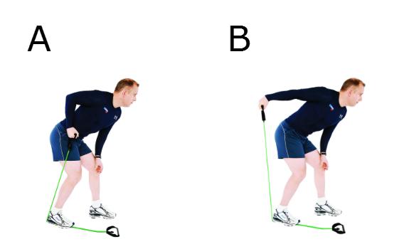 Extension des avant-bras