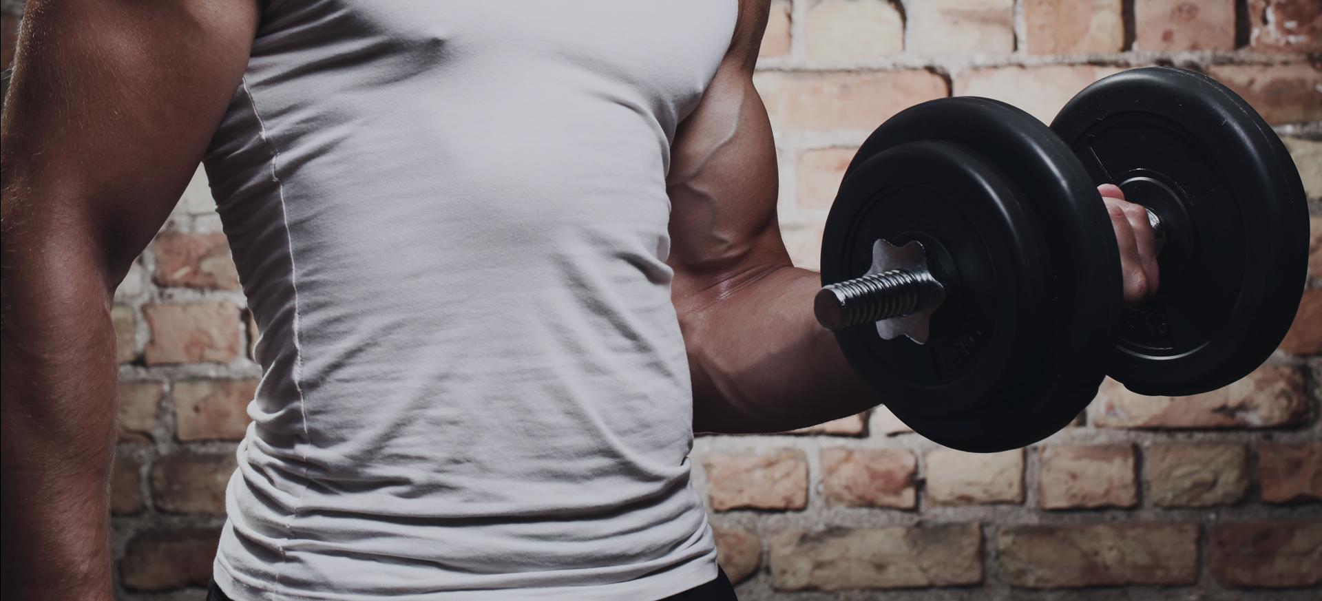 Gain de masse musculaire