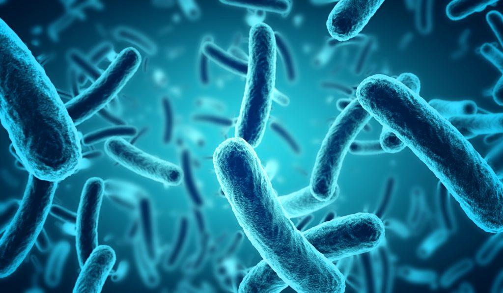 microbiota