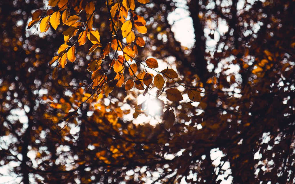 vitamins to survive fall season